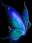 -butterfly